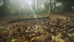 Camera moves amongst the leaf covered ground in a forest, shot on RED EPIC Stock Footage