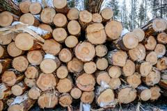 Snow log stack lumber in winter. - stock photo