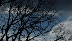 Panning Through Tree Branches Under Majestic Fast Moving Sky Stock Footage