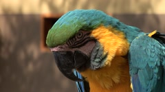 Parrot in Peru Stock Footage