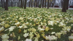 foliage  on the grass in the park - stock footage