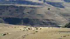 Simien Mountains National Park, UNESCO World Heritage Site, Amhara region, Ethio Stock Footage