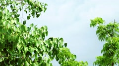 The leaves of the tree that the wind blew, space for text Stock Footage