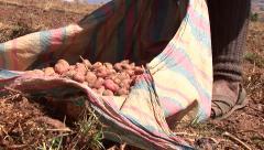 Harvested Potatoes, Peru Stock Footage