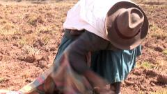 Harvesting farmer Woman in the andes of Peru Stock Footage