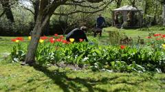 Couple of young gardener working between spring tulip flowers Stock Footage