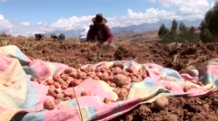Harvesting farmers in the andes of Peru Stock Footage
