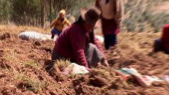 Potato harvesting farmers in the andes of Peru Stock Footage