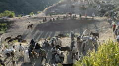 The market with cattle in Lalibela in Ehtiopia Stock Footage