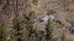Roe deers Stock Footage