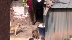 Shanty Town, Peru - stock footage