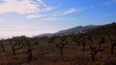 La Palma island sunset view from vineyard on Tenerife Stock Footage