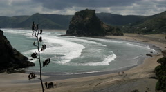 Piha beach and lion rock Stock Footage