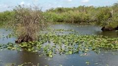 USA Florida Everglades National Park 010 aquatic plant and small mangrove trees - stock footage