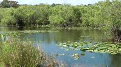 USA Florida Everglades National Park 006 Anhinga Trail lake with aquatic plants - stock footage