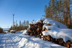 Deforestation in the clearing of power line - stock photo