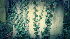 Lots of vines growing on each tombs in the cemetery - stock footage