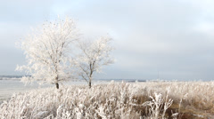 Winter landscape - frozen two trees, old grass, white clouds on blue gray sky Stock Footage