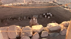 Mummy in a grave, Peru Stock Footage