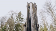Hollow Tree attraction, Stanley Park, Vancouver BC Canada Stock Footage