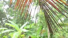 Raindrops falling on palm leaf Stock Footage