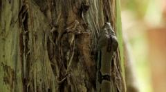 Snake crawling on banana tree Stock Footage
