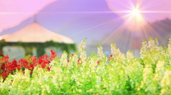 Flowers and bower in park at sunset Stock Footage