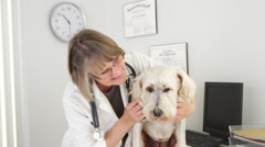 Senior vet smiling at camera with wheaten terrier mix Stock Footage