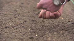 Planting parsnip seeds manually Stock Footage