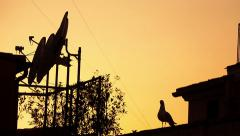 Seagull on the roof at sunset Stock Footage