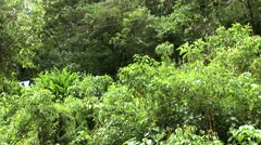 Train in the rain forest in Peru - stock footage