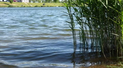 Waves on pond Stock Footage