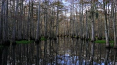 4K Mirror reflections of trees in florida everglades wetlands Stock Footage