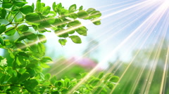 Green leaves and sunrays slowmotion seamless loop Stock Footage