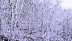 Winter Wonderland Woods Kentucky Forest National Park Season Change Stock Footage