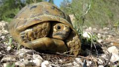 Small shy turtle turns away from camera, slow motion Stock Footage