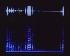Spectrogram of an animal call: a crowing rooster + hens cackling Stock Footage