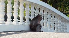 Monkey In Park Stock Footage