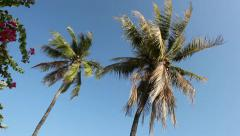 Two coconut palm tree on the wind with sky on the background Stock Footage