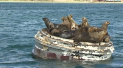 Seal, Land of Fire Stock Footage
