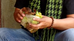 Betel nut chewer young man take dried tobacco leaf Stock Footage