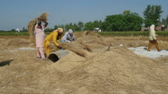 India agriculture, village, rural scene, women extract rice, manual labor - stock footage