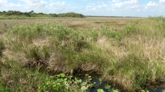 USA Florida Everglades National Park 027 wide view over the swamp landscape Stock Footage