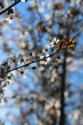 Springtime buds in a tree Stock Photos