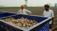 Stock Video Footage of India, two farmers, potatoes, tractor, fields, agriculture