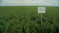 View of signboard in green wheat field - stock footage