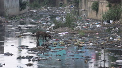 India, stray dog searching food in heavily polluted stream in slum area Stock Footage