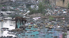 India, Bangalore, stray dog searching food, poverty, pollution, slums - stock footage