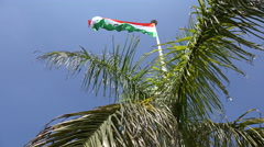 The national flag of India behind a palm tree Stock Footage