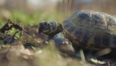 Turtle crawling on the ground Stock Footage
